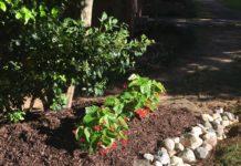 DIY Dry Creek Bed | Rock Garden